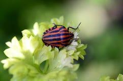 Zoologia, insekt obrazy stock