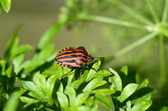 Zoologia, insekt obraz stock