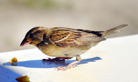 Zoologia, ptak obrazy royalty free