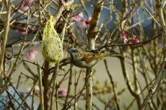Zoologia, ptaki zdjęcie stock