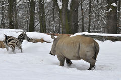 Zoological garden in winter Royalty Free Stock Image