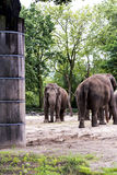 Zoological Gardens in Germany Royalty Free Stock Photo
