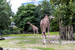 Zoological Gardens in Germany Stock Photo
