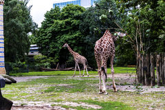 Zoological Gardens in Germany Stock Image