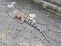 zoologico Santa Fé medellin Colômbia fotografia de stock royalty free