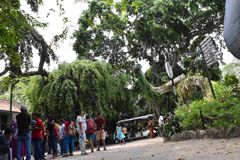 Zoologiczni ogródy, Dehiwala colombo sri lanki obraz stock