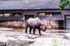 Zoologiczni ogródy w Niemcy Zdjęcia Royalty Free
