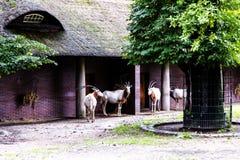 Zoologiczni ogródy w Niemcy Obrazy Royalty Free