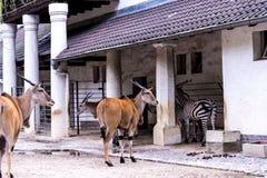Zoologiczni ogródy w Niemcy Zdjęcie Royalty Free