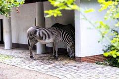 Zoologiczni ogródy w Niemcy Zdjęcie Stock