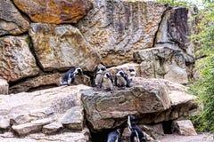 Zoologiczni ogródy w Niemcy Obraz Stock