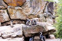 Zoologiczni ogródy w Niemcy Obrazy Stock