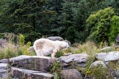 Zoologiczni ogródy w Niemcy Fotografia Royalty Free