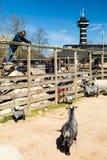 Zoologischer Garten Kopenhagens Stockbild