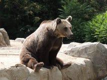 zoologiskt björnberlin trädgårds- germany foto Arkivfoton