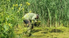 Olomouc, Czech Republic, May 30, 2019: Zoologist man in capturing or snagging amphibians for monitoring endangered. Zoologist man in capturing or snagging stock video