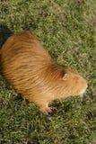 Zoology, Animal Stock Image