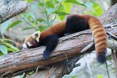 Zoology, Animal Royalty Free Stock Images