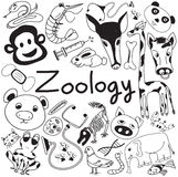 Zoology biology doodle icons of various animal species Stock Images