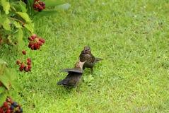 Zoology, birds Stock Photo