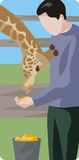 Zoology illustration series. Vector illustration of a zoo worker, feeding a giraffe Royalty Free Stock Image