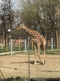 Zooloska immagini stock