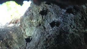 Zoom in from bats inside a tree stock video footage