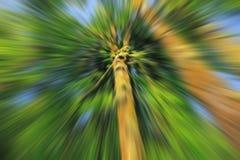 Zoom brouillé recherchant un arbre Photos libres de droits