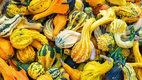 Zoom in on colored pumpkins. Zoom in on colored beautiful pumpkins stock video footage