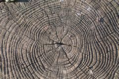Zoom of cut tree trunk royalty free stock photo