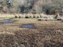 Zoom da textura da região pantanosa. Fotos de Stock Royalty Free