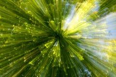 Zoom de crash de forêt Photos libres de droits