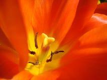 Zoom de la flor Imagen de archivo libre de regalías