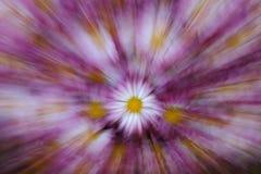 Zoom de la flor Fotos de archivo libres de regalías