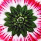 Zoom de la flor fotografía de archivo libre de regalías