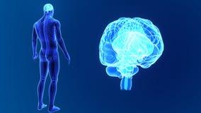 Zoom del cervello umano con lo scheletro royalty illustrazione gratis