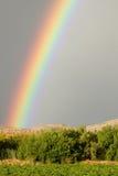 Zoom dell'arcobaleno sopra le vigne dell'uva fotografie stock