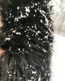 Zoom della pelliccia con neve fotografie stock