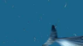 Zoom della terra stock footage