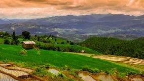 Zoom des Hd-Zeitspanne Pabongpiang-Reis-Feld-4 heraus färben stock video footage