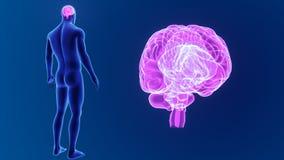 Zoom des menschlichen Gehirns mit Körper