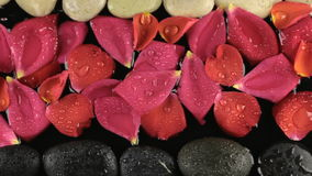 Zoom drops of water falling on stones and rose petals. Beautiful concept. Spa concept. stock video