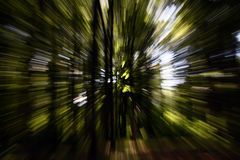 zoom effect dream forest Royalty Free Stock Image