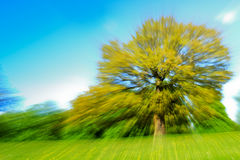 Zoom Effect Motion Blur of a Tree in a Field of Buttercups stock photos