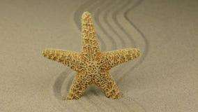 zoom Estrela do mar bonita que encontra-se em um ziguezague feito da areia video estoque