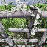 Zoom för blommaJapan närbild arkivfoton
