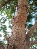 Zoom fino ad un gambo dell'albero con molte crepe nel tempo di giorno alla molla in villaggio Immagini Stock
