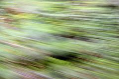 Zoom forest Stock Photos