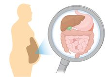 Zoom in internal organ about digestion of Fat man with Magnifying glass. Royalty Free Stock Image