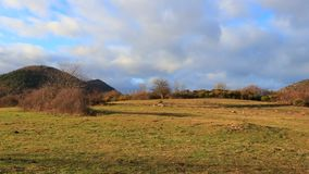 Zoom on a isolated tree in a pyrenean meadow. Aude in south of France stock video